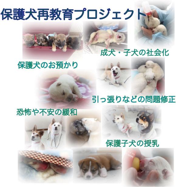 保護犬再教育バナー